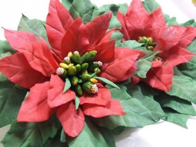 "Workshop ""Christmas flower Poinsettia"""