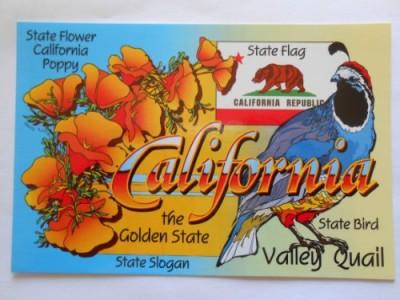 "Children's Club: ""California"""