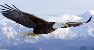 Painting workshop for kids: «Let's paint an eagle»