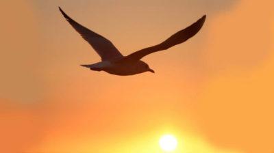 Лекция-моноспектакль «Чайка по имени Джонатан Ливингстон»